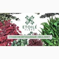 Магазин стабилизированных растений Этуаль Флора