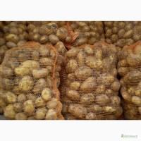Продам картофель цена от производителя