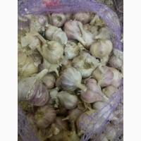 Продам чеснок Любаша 3-5 калибр, недорого, Украина
