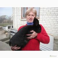 Кролики разных пород, племенные, элитные