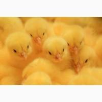 Продается птицефабрика в Одессе 3700 м кв, участок 1 га