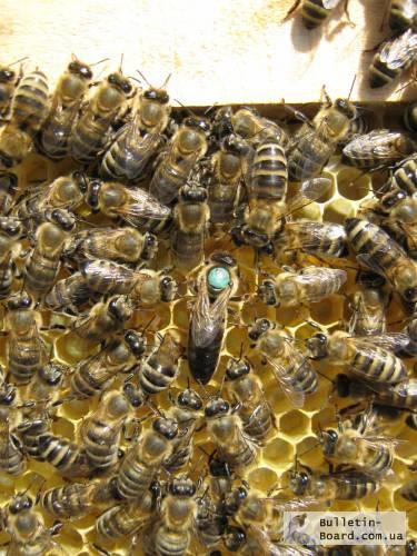 Пчёлы: Карпатка.Пчелопакеты 2018 г. Пчелиные плодные матки. Доставка по Укр
