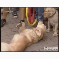 Шоу дрессированых собак Донецк и область