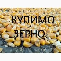 Закуповуємо відходи кукурудзи (вологу кукурудзу, чи не кондицію) по Дніпропетровській обл