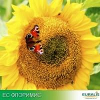 Семена гибрида Флоримис (А-Е) Clearfield Euralis Semences (Евралис Семанс)