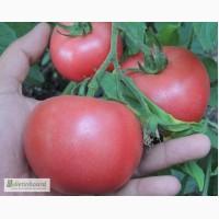 Семена Томат Пинк розовый