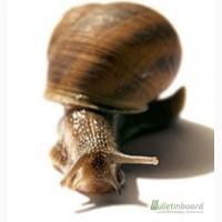 Купить Snail-active, 5 мл