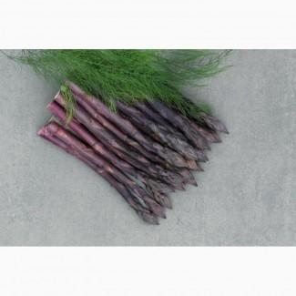 Продам саженцы спаржи фиолетовой, саженцы аспарагуса фиолетового голландского гибрида
