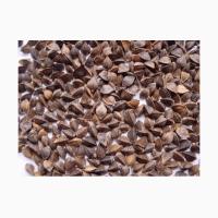 Семена гречки сорт Воля. Элита