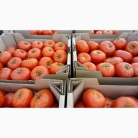 Продам томаты тепличные, купить томат оптом, помидоры оптом