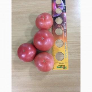 Продам помидор сорт Хапинет (розовый) Производитель