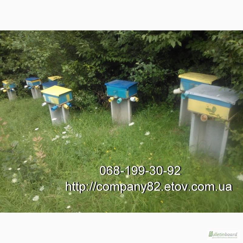 Фото 3. Пчёлы: Карпатка.Пчелопакеты 2018 г. Пчелиные плодные матки. Доставка по Укр