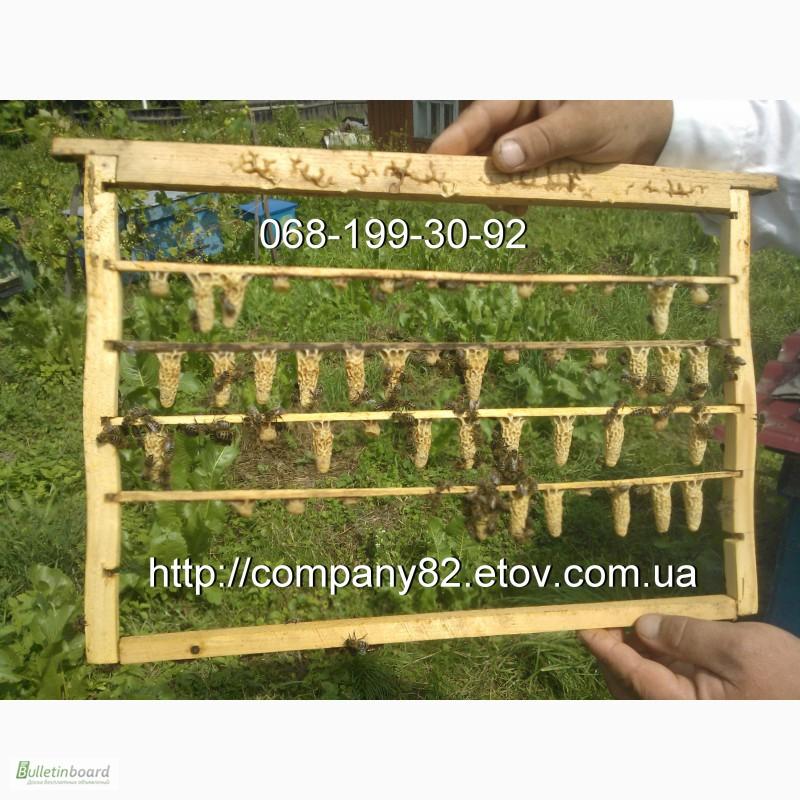 Фото 4. Пчёлы: Карпатка.Пчелопакеты 2018 г. Пчелиные плодные матки. Доставка по Укр