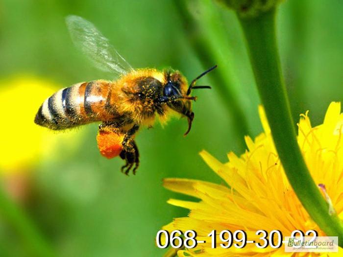 Фото 6. Пчёлы: Карпатка.Пчелопакеты 2018 г. Пчелиные плодные матки. Доставка по Укр