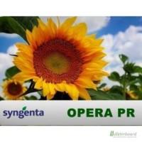 Семена подсолнечника Syngenta Opera PR (Сингнета Опера ПР)