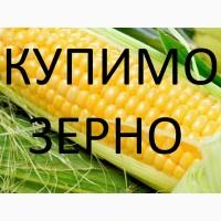 Закуповуємо по Тернопільській області кукурудзу для власної переробки