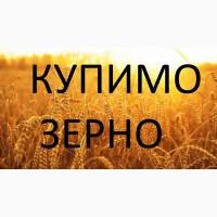 Постійно купуємо кукурудзу з господарств і у виробників від 25 тонн