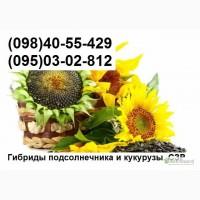 Продам семена подсолнечника Брио, Неома, Роки, Мегасан (урожай 2015г)