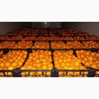 Мандарины ОПТОМ!Опт мандарин отличного качества