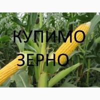 Компанія постійно і дорого закуповує кукурудзу будь-якої якості (можливо вологу)