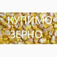 Закуповуємо кукурудзу у сільгоспвиробників з ПДВ, по Львівській області
