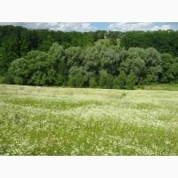 Земельный участок с. Мокрець, Броварской район, Киевская область