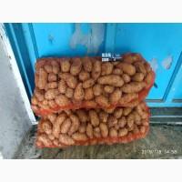 Продам семенной картофель сорт Гранада