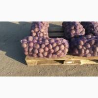Продаем Картофель Оптом лучшае каяество и цена