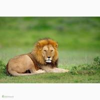 Путешествие по Африке. Отдых в ЮАР. Водопад Виктория (Замбия, Зимбабве и др)