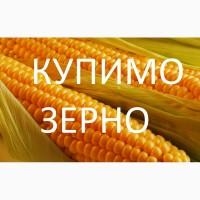 Велика компанія на вигідних умовах закуповує кукурудзу за високими цінами