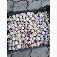 Продадим чеснок 1-й репродукции на еду или переработку