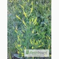 Продам буркун лікарський трава