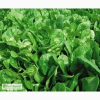 Продам семена шпината БОСС Satimex Германия