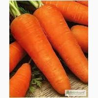 Продам семена Морковь Шантане