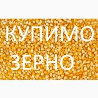 На постійній основі закуповуємо кукурудзу. З господарств та елеваторів від 100 тонн