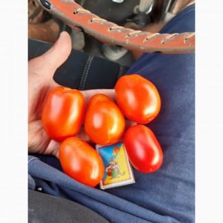 Продам помидор хорошего качества