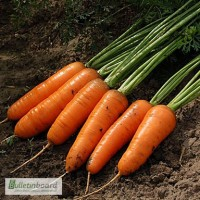 Продам семена моркови Медовянка