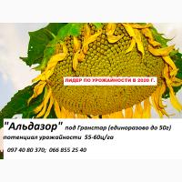 Семена высокоурожайного подсолнечника Альдазор под гранстар, фракция стандарт