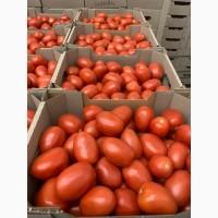 Продам помидор тепличный от производителя