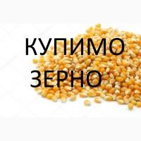 Закуповуємо кукурудзу !!! не кондицію, вологу, биту