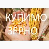 Закуповуємо кукурудзу з фермерських господарств