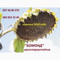 Семена высокоурожайного подсолнечника Бомонд под гранстар, фракция стандарт