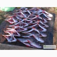 Рыбная компания реализует речную вяленую рыбу оптом
