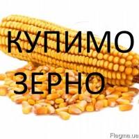 Закуповуємо кукурудзу фуражну великий об'єм. По Вінницькій області