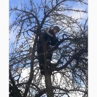 Обрезка деревьев, восстановление старых садов