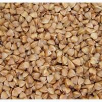 Семена/Посев.мат. гречихи Арно, Гренби, Дикуль, Селяночка