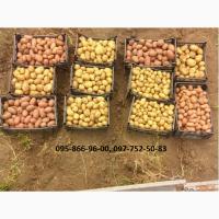 Картофель семенной (посадочный) 1 репродукции. В наличии 20 сортов
