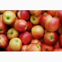 Яблоки для промышленной переработки