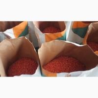 Семена кукурузы Галатея, Новый, Моника, ВН63, Гран6 и др