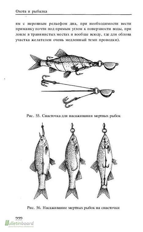 ловля с поплавком на мертвую рыбку
